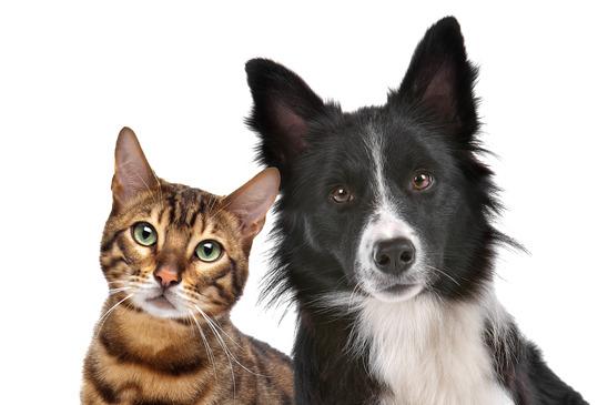 Assurance animaux : la meilleure assurance pour chien et chat